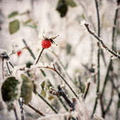 Leaves covered with morning frost. — Stock Photo