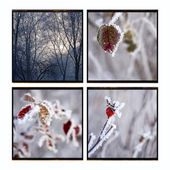 Leaves covered with morning frost. Photocollage — Stock Photo