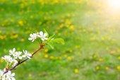 Fundo fresco da Primavera — Fotografia Stock