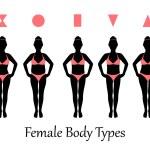 Female body types — Stock Vector #64007657
