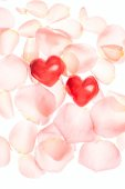 Rose petals and hearts valentine light background — Stock Photo