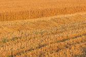 Letní krajina s zemědělská pole — Stock fotografie