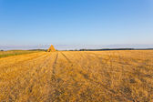 Piled hay bales on a field — Stock Photo