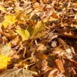 Colorful backround image of fallen autumn leaves — Stock Photo #53123731