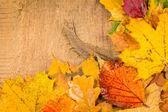 Wet autumn leaves — Stock Photo