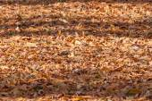 Colorful backround image of fallen autumn leaves  — Stock Photo