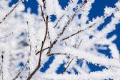 Closeup der zweige des baumes winter schnee — Stockfoto