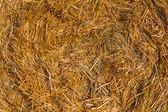 Piled hay bales on a field against blue sky — Foto de Stock