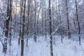 Karda orman — Stok fotoğraf