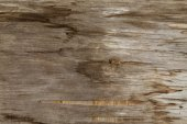 Old wood textured background — Stock Photo