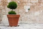 Italian traditional home decorations — Stock Photo
