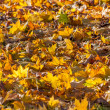 Colorful backround image of fallen autumn leaves  — Stock Photo #70463813