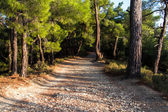 Walking Path in Forest — Stock Photo