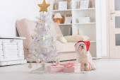 Little dog wearing Santa Claus hat — Stock Photo
