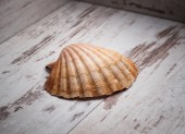 Scallop shell on wooden background — Stock Photo