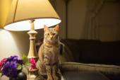 Cat in a Lamp — Stock Photo