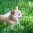 Nelson in Grass — Stock Photo #75923143