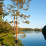 Pine tree on Ladoga lake shore — Zdjęcie stockowe #67294537