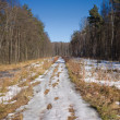 Spring country road with melting snow in forest — Stock Photo #68751779