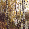 Birch grove on the lakeside of forest lake with Instagram style — Stock Photo #69856369