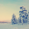 Snowy field pine trees under blue sky with Instagram style filte — Stock Photo #69856393