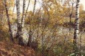 Huş grove Instagram tarzı ile orman göl göl üzerinde — Stok fotoğraf