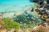 Uncontaminated ocean water (Island of Pianosa, italy) — Stock Photo