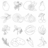 Coloring book. Set of fruits and vegetables — Stock Vector