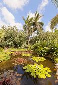 Pond in QE II Botanic Park on Grand Cayman Island — Stock Photo