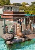 Feeding of California sea lions in Ueno Zoo, Tokyo — Stock Photo