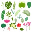 Set of stylized tropical plants, leaves and flowers. — Stock Vector #57836359