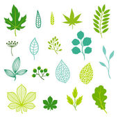 Set of green leaves and elements. — Stock Vector
