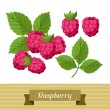 Set of various stylized raspberries. — Stock Vector #61967181