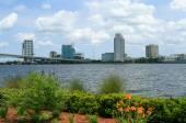 Flowers along the Jacksonville Riverwalk — Foto de Stock