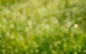 Semente de cardo de leite usado na medicina herbal para desintoxicação e proteção do fígado. Silybum marianum — Fotografia Stock