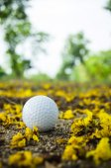 Bola de golfe — Fotografia Stock