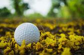 Golfball auf tee — Stockfoto