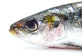 Head of a sardine — Stock Photo