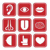 Red Human icon set — Stock Vector