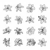 Lily flowers icons — Stock Vector