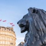 Trafalgar Square lion — Stock Photo #67226175