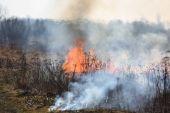 Grass fire — Stock Photo