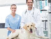 Veterinarians with dog in clinic — Stok fotoğraf