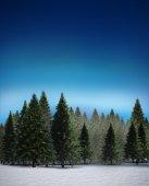 Fir tree forest in snowy landscape — Stock Photo