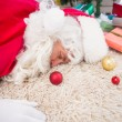 Exhausted santa sleeping on the rug — Stock Photo #57259587
