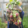 Woman showing home grown vegetables — Stock Photo #60824805