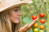 Pretty blonde looking at tomato plant — Stok fotoğraf