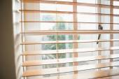 Close up of open blinds  — Stock Photo