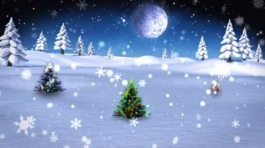 Christmas trees growing in snowy landscape — Vídeo de stock