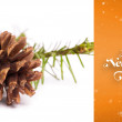 Brown pine cone with fir branch — Stock Photo #62473463